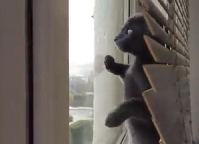 VIDEO – Ce petit chat trop mignon découvre pour la première fois