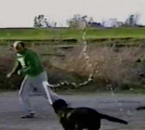 VIDEO : Un chien qui semble adorer jouer avec l'eau