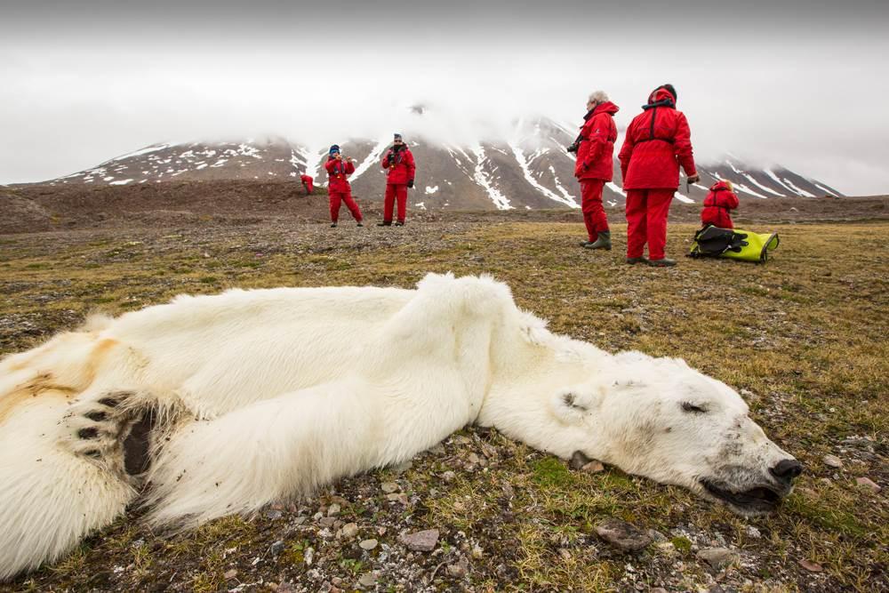 Un ours polaire à l'agonie devient le terrible symbole du réchauffement climatique.