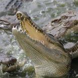 au-mexique-la-population-craque-et-envoie-un-violeur-presume-aux-crocodiles