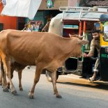 inde-un-homme-battu-mort-pour-avoir-tue-une-vache