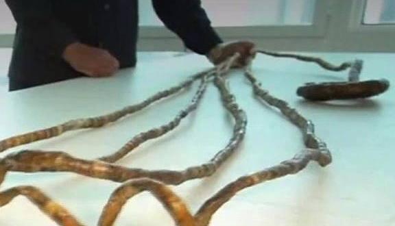 Inde : un homme se coupe les ongles pour la première fois en 66 ans !