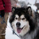 une-famille-retrouve-son-chien-fugueur-plus-de-400km-de-chez-eux